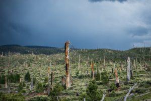 Buned-Trees